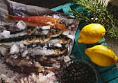 Ingredients for fish dishes: red mullet, sardines, raisins