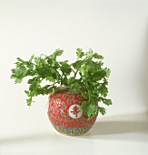 Fresh coriander in Chinese vase