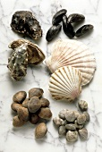 Still Life of Assorted Shellfish