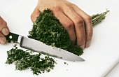 Chopping curly leaf parsley