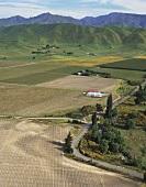 Aerial photograph of vineyards around Marlborough, N. Zealand