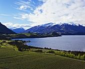 Weinberg am Lake Wanaka, Central Otago, Südinsel Neuseelands