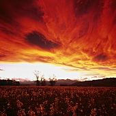 Twilight over Cloudy Bay Vineyard, Marlborough, N. Zealand