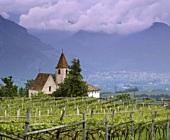 Weinberg oberhalb von Bolzano (Bozen), Südtirol, Italien