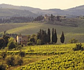 Weinberg vor dem Castello di Rampolla bei Panzano in Chianti