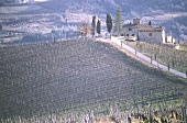 Vineyard at Radda in Chianti, Tuscany, Italy