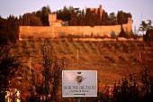 Ricasoli vineyard Castello di Brolio, Chianti Classico, Tuscany
