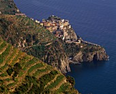 Terraces around the village of Manarola in Cinqueterre, Liguria