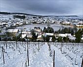 Winter: Clos de Mesnil (Krug),edelster Weinberg der Champagne