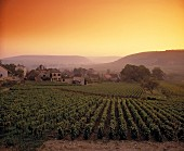 Twilight at Monthelie, home of fragrant red wines, Burgundy