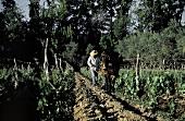 Artificial Waterway for Vineyard at Mendoza in Argentina