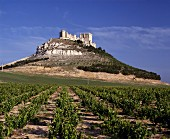 Penafiel Castle above its vineyard, Ribera del Duero, Spain