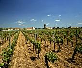 Zuverlässig und köstlich: Weine aus Pomerol, Ort in Bordeaux