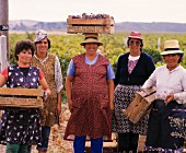 Women grape picking for J. P. Vinhos, Baixo Alentejo, Portugal