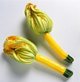Two Whole Summer Squash with Blossoms