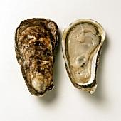 Amerikanische Austern: Chatan von der US-Ostküste