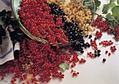Red Black and White Currant
