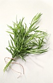 A Bunch of Tarragon Tied with String