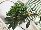 An Herb Bouquet