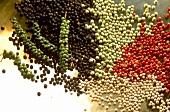 Verschiedene Pfefferkörner, weiß, grün, rot, schwarz