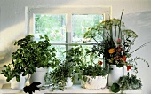 Assorted Herbs in Pots on a Window Sill