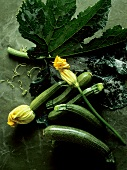 Several Zucchini; Some with Blossoms