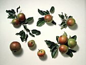 Several Crab Apples