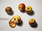 Five Braeburn Apples; One Peeled