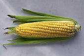 One Ear of Corn with Husk