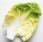 One Leaf of Cabbage