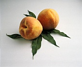 Two peaches on leaves