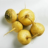 Five Teltower turnips against a white backdrop