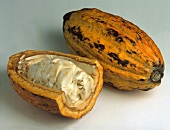 Whole ripe cacao fruit and opened fruit with fruit pulp