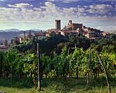 Reben am historischen Castell'Arquato,Emilia Romagna,Italien