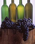 Mehrere Merlot-Trauben vor vier leeren Weinflaschen