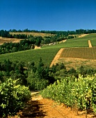 Knudsen-Erath Winery in Red Hills, near Dundee, Oregon, USA