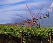 Irrigation system at Mercer Ranch Vineyards, Washington, USA