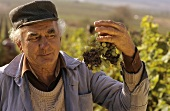 Proud vintage worker with nobly rotted grapes, Tokay, Hungary