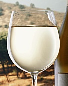 A filled white wine glass beside bottle by vineyard