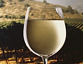 A filled white wine glass in front of summery vineyard