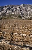 Vineyard against mountain chain in Domaine Richeaume, Provence