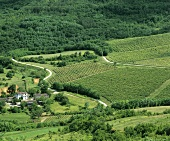 View of vineyards near Motovun, Istrian Peninsula, Croatia