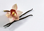 Two Vanilla Pods with a Blossom