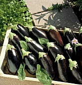 Eggplants in a Wooden Box Outside