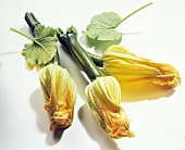 Three Zucchini Blossoms