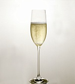 A glass of sparkling champagne (white background)