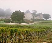 The Chateau d'Yquem in autumn mist, Sauternes, Bordeaux