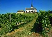 Domdechaney, first class vineyard below Hochheim (Rheingau)