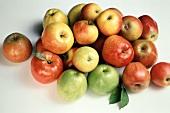 Assorted Apple Still Life
