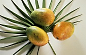 Three Whole Mangos on Palm Leaves